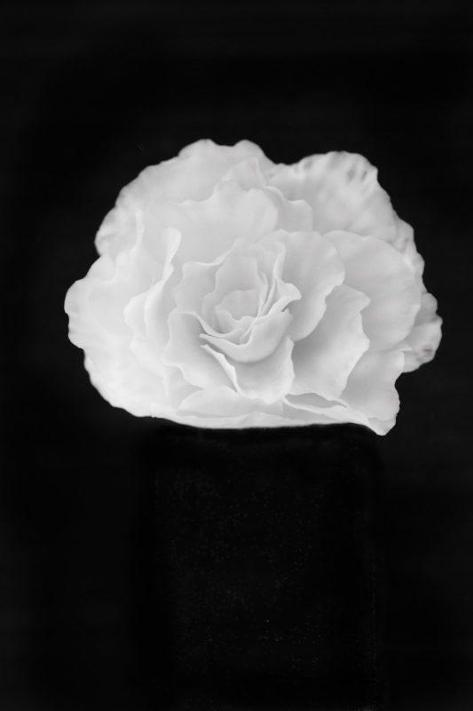 アマサキソウ / Marina blossomnia
